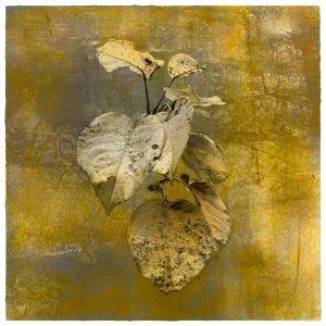 Pyrus Botanical Archival Pigment Print Iskra