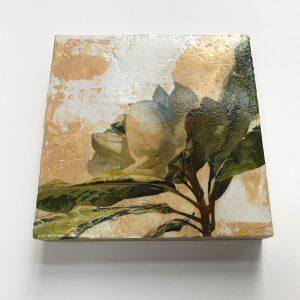Magnolia Venetian Plaster by Iskra