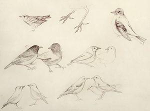 Bird Sketches Iskra