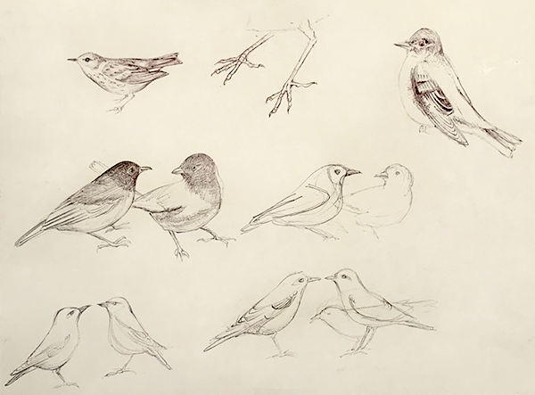 Bird Sketches Iskra