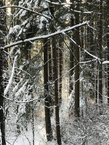 Forest scene Iskra Photo