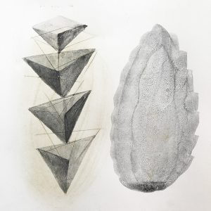 Form Study Pine Cone by Iskra