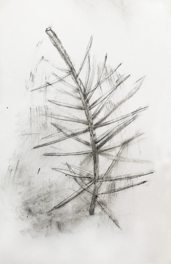 Pine Needle Drawing by Iskra