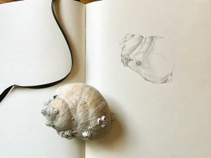 Concentration drawing of a moon shell by Iskra