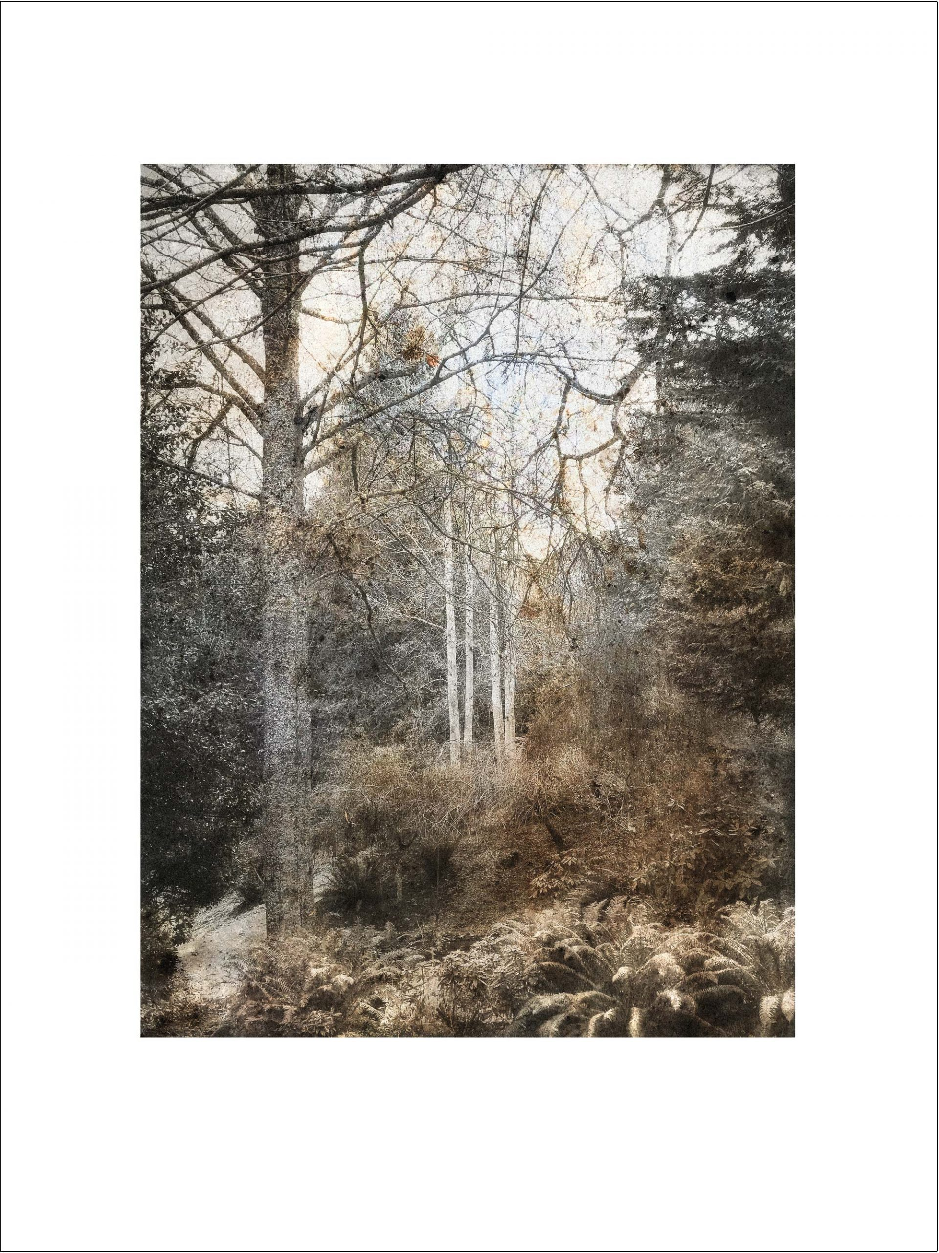 Forest Grove Fine Art Print by iskra