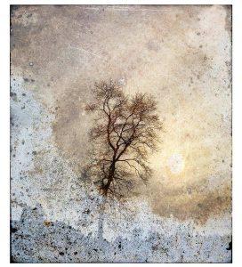 Winter Walk Print by Iskra