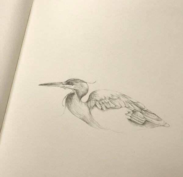 Heron Drawing in Pencil by Iskra
