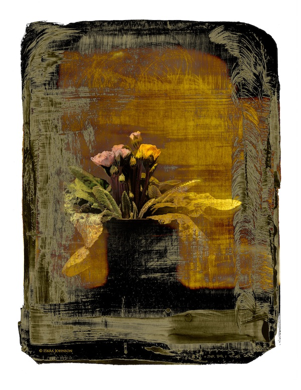 Golden Primrose print by Iskra