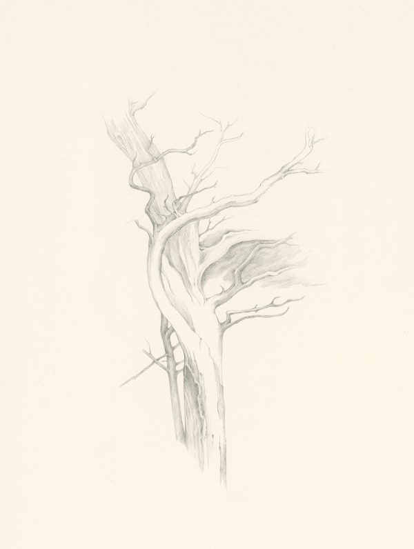 Windshaped, tree drawing by Iskra