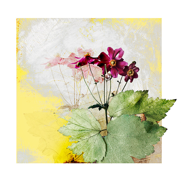 Anemone in Spring Botanical Print by Iskra