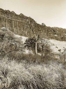 Canyon Creek Tree western landscape by Iskra