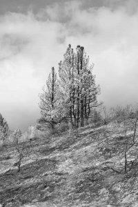 Pine Ridge Black and White Photography Iskra
