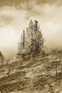 Pine Ridge Duotone Photo by iskra
