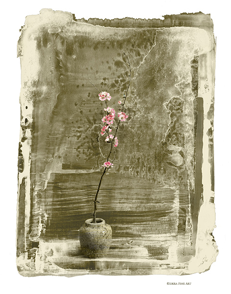 Quince Blossom in Snow Print by Iskra