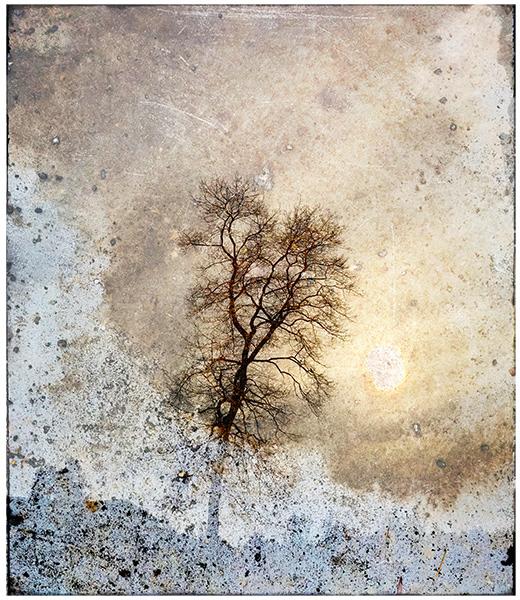 Solstice Walk Tree print by Iskra