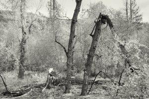 The Bent Tree Iskra Landscape Photograph