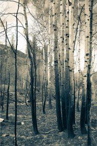 The White Grove Iskra Landscape Photo