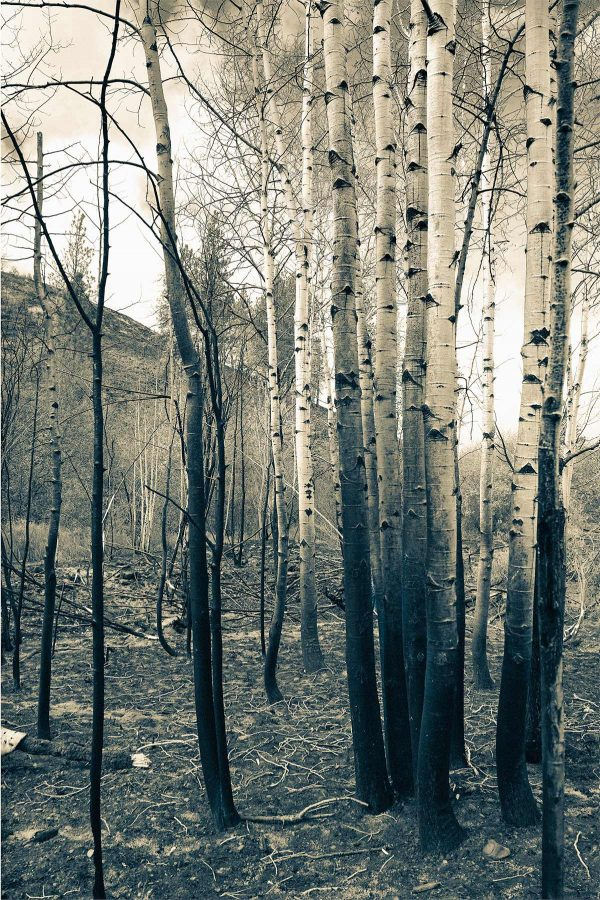 The White Grove Iskra Landscape Photo
