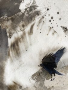 Kerasu (Raven)